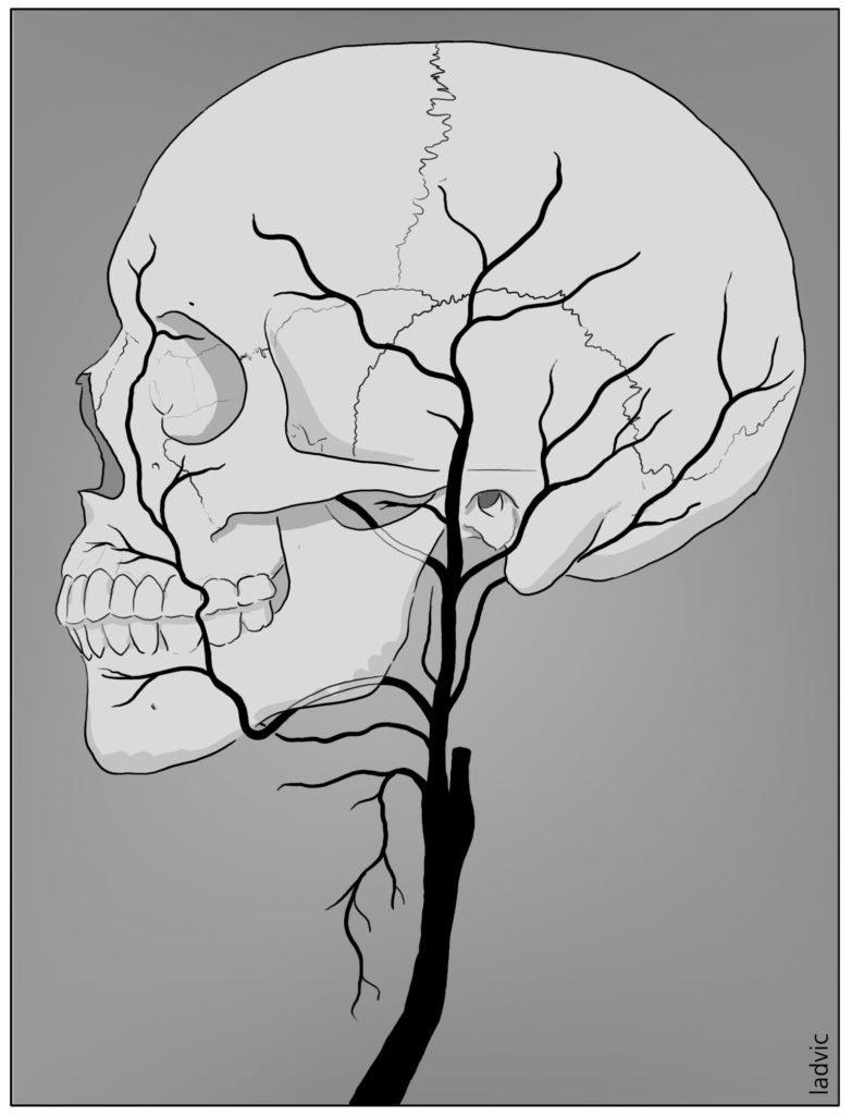 External carotid artery anatomy
