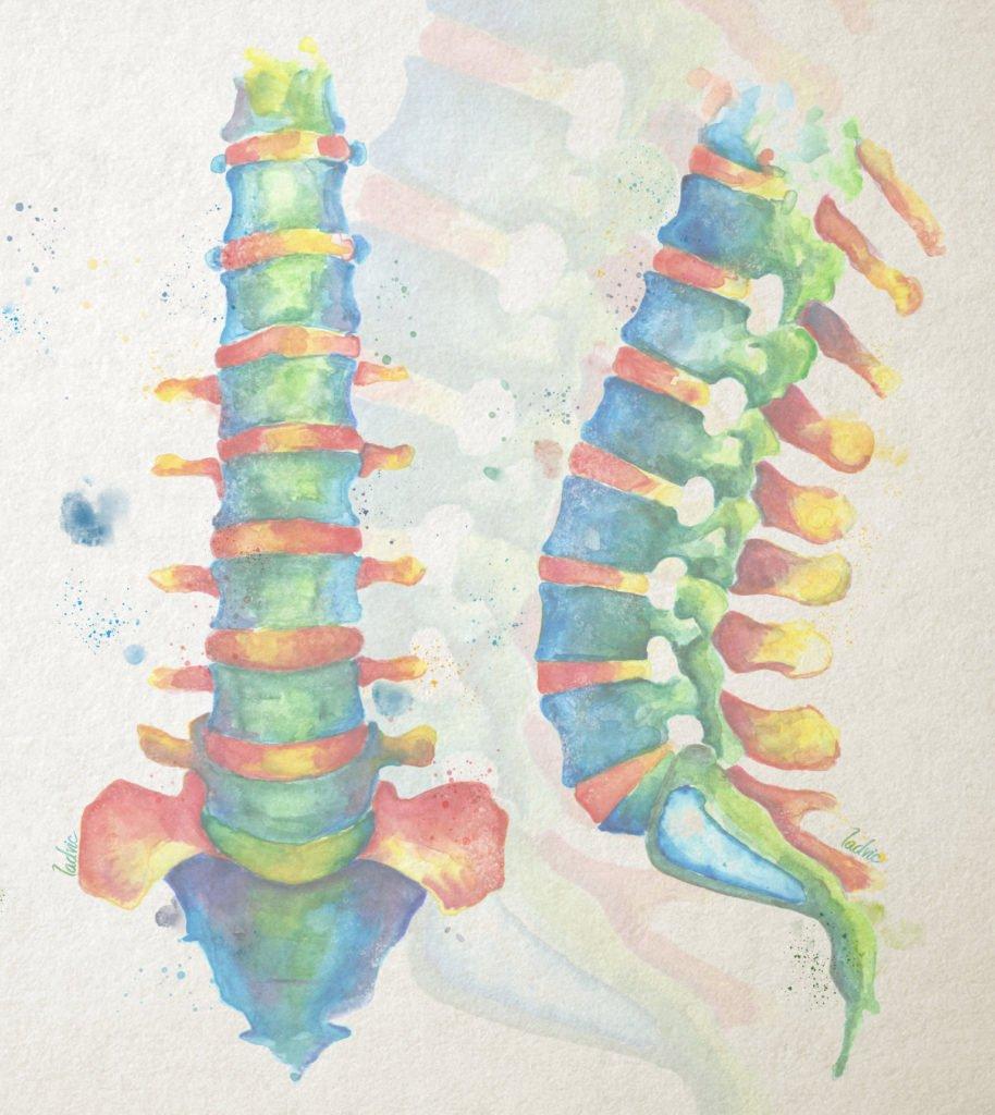 Lumbar spine watercolour illustration.