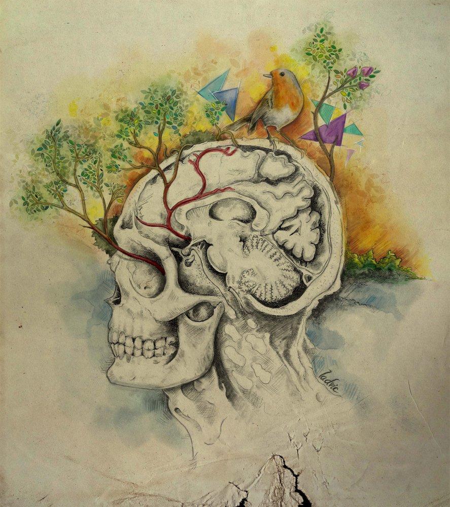 Head Anatomy and Bird. Mixed media. Traditional art (graphite pencils) and digital art (digital coloring).